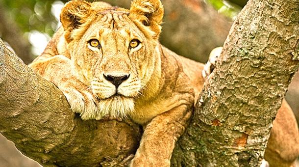 9 Days Uganda Safari –Gorilla & Wildlife Tour - Gracious Tours & Travel